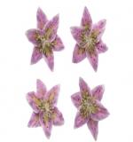 Цветы лилии, нежно сиреневые