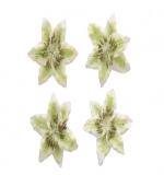 Цветы лилии, светло-зеленые