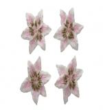 Цветы лилии, бело-розовые