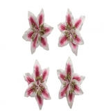 Цветы лилии, красно-белые