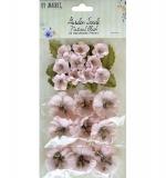 (49M) Garden seeds - Natural blush