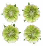 Цветы анемоны, светло-зеленые