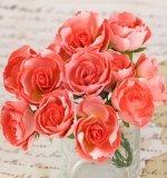 Набор цветов Soprano Coral 12шт. (Prima)